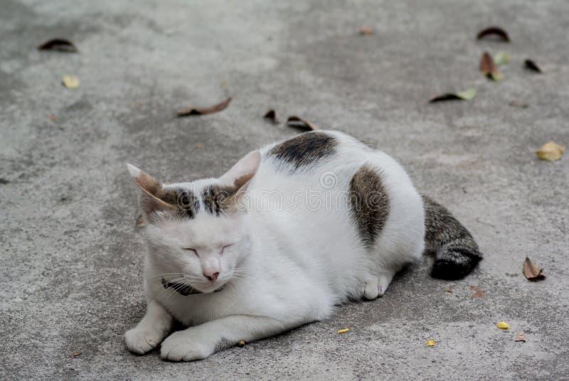 在地面的困猫 库存图片