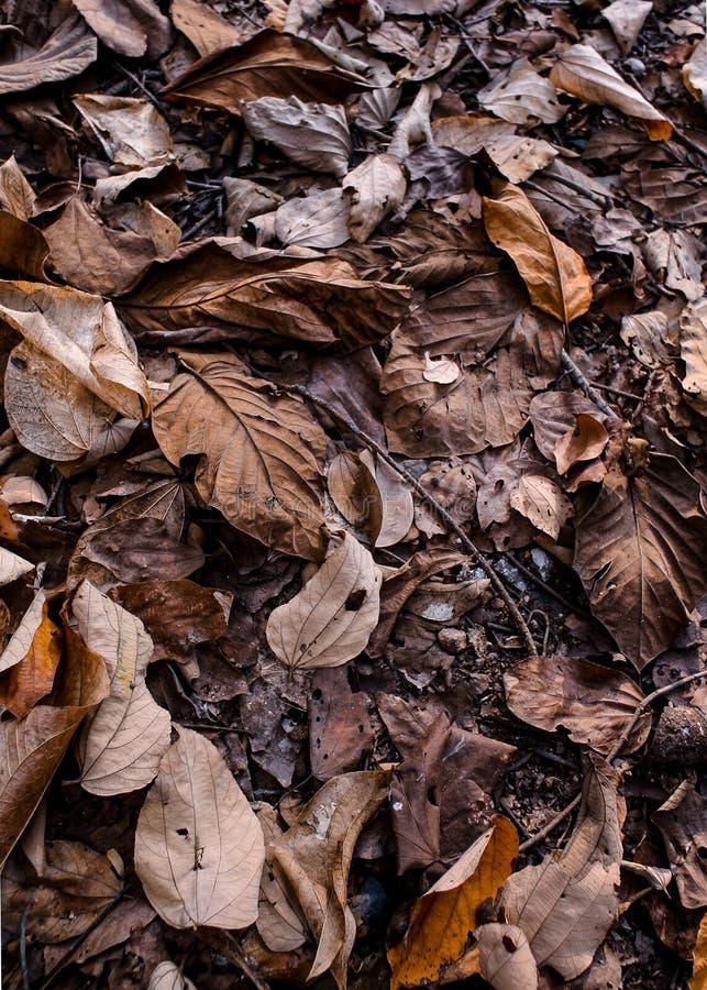 在地面的干叶子 免版税图库摄影