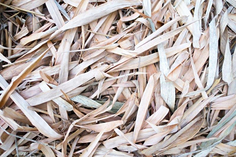 在地面的干燥竹叶子 库存照片
