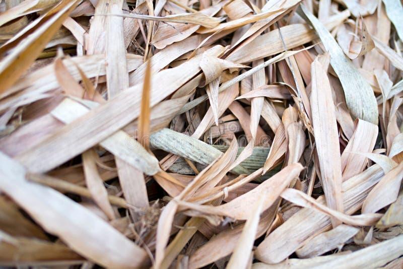 在地面的干燥竹叶子 库存图片