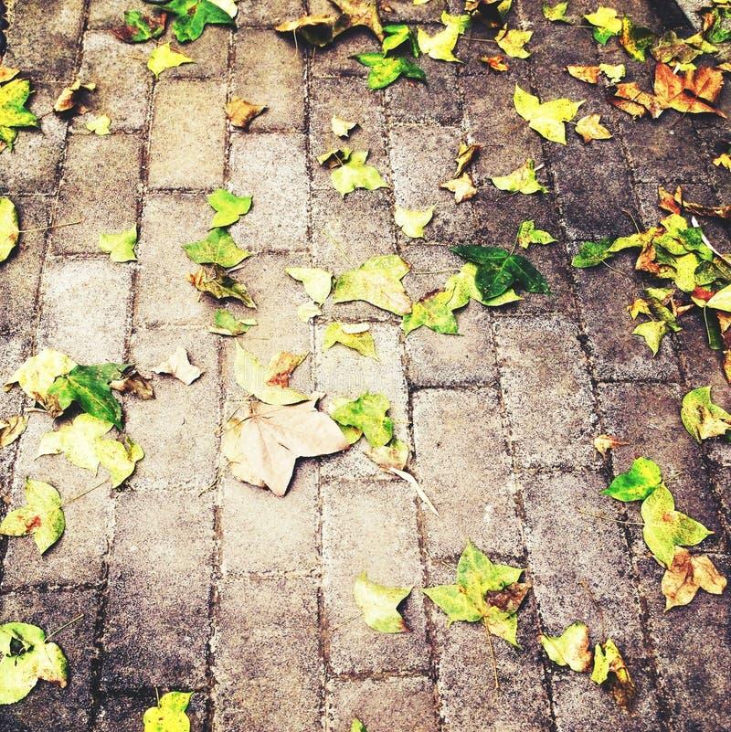 在地面的秋天黄色秋叶 库存照片