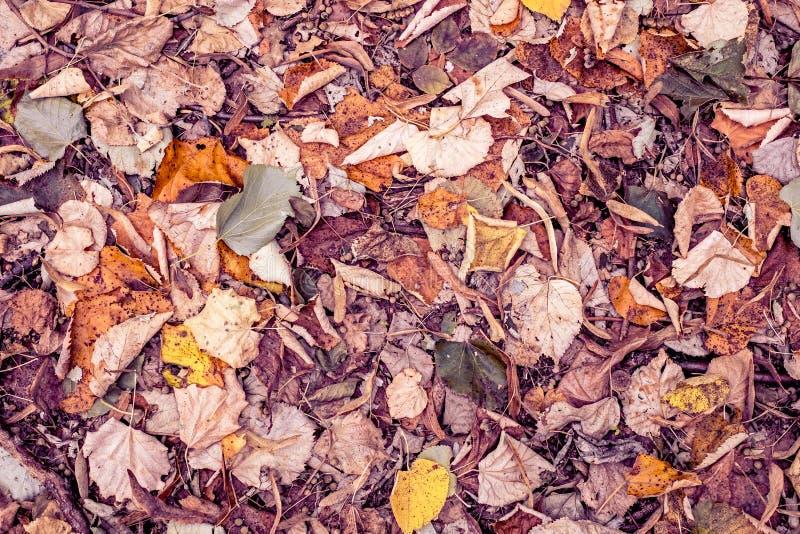 在地面的秋季多色下落的山毛榉叶子 免版税库存图片