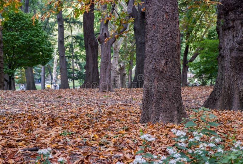 在地面的金黄黄色叶子在秋天时间在中央公园,纽约 图库摄影