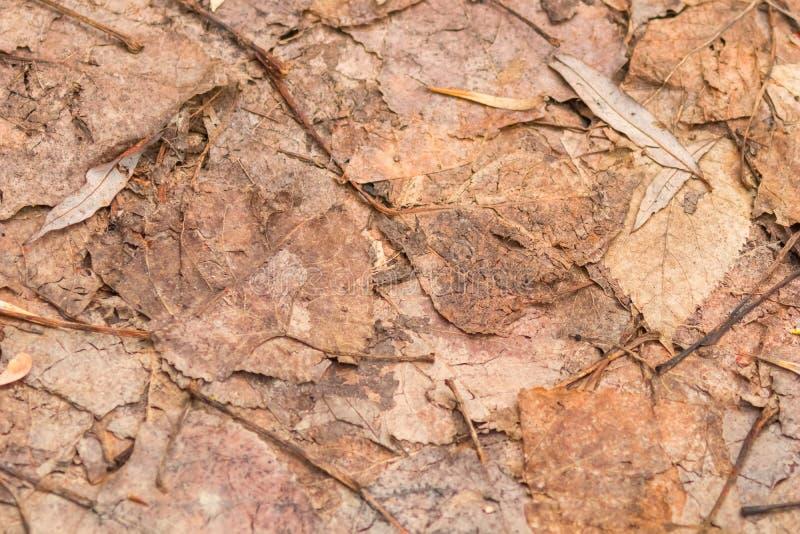 在地面纹理的干燥叶子,接近被按的板簧时间 免版税库存图片