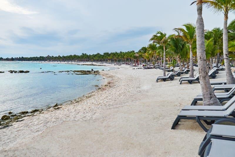 在坎昆海滩的长的白色沙子在有轻便折叠躺椅联盟的墨西哥与可可椰子树一起 库存图片