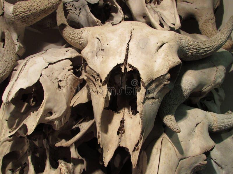 在坚硬捣毁在水牛城的水牛城skullls跳跃 免版税库存图片