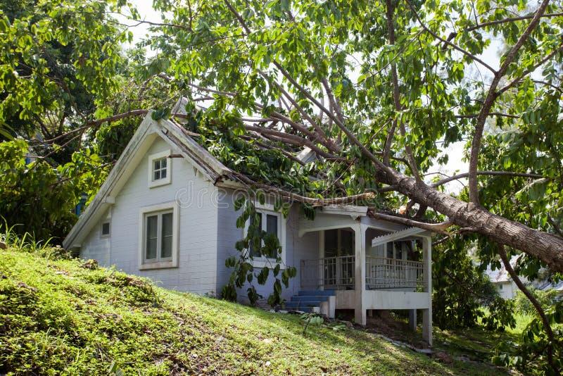 在坚硬风暴以后的落的树在损伤房子 免版税库存图片