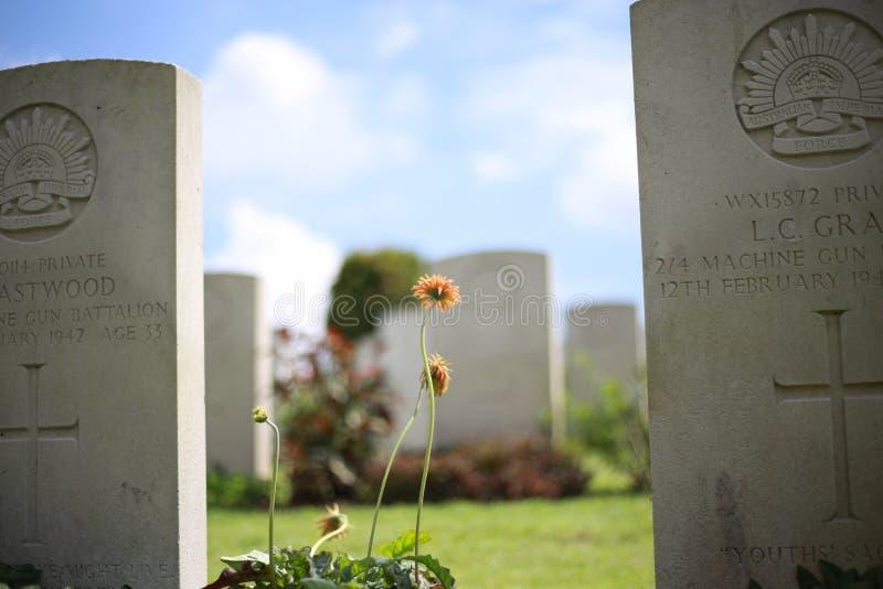 在坟茔的向日葵 免版税库存照片
