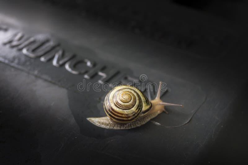 在垃圾箱的盖子的蜗牛 图库摄影