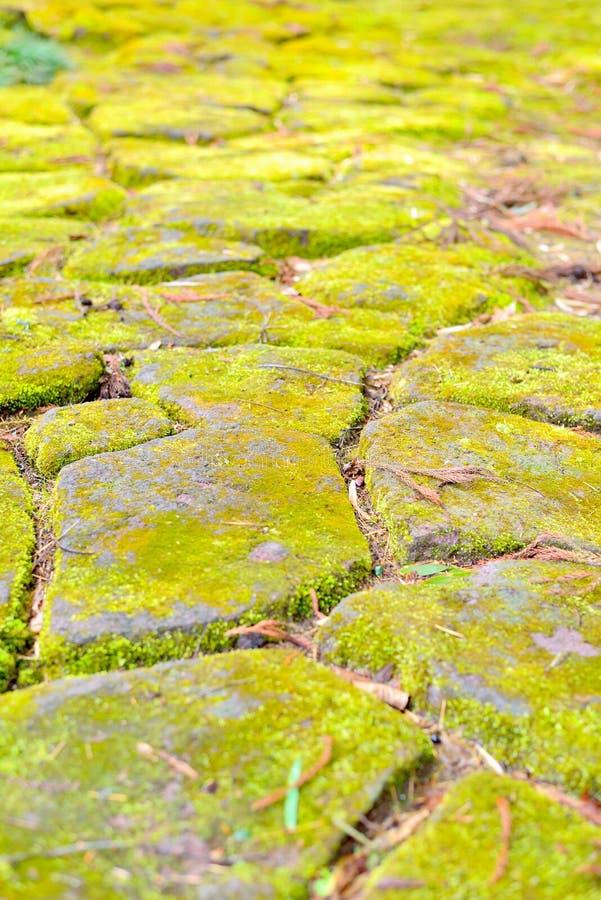 在垫脚石的青苔在日本庭院里 免版税库存照片