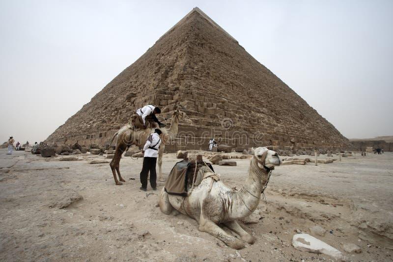 在埃及的伟大的金字塔的骆驼 免版税库存图片
