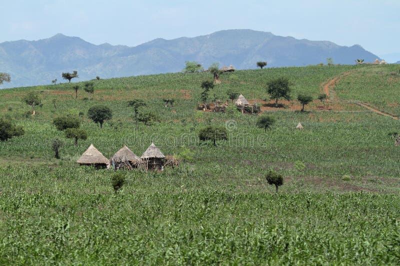 在埃塞俄比亚的Omo谷的传统秸杆小屋 免版税库存图片