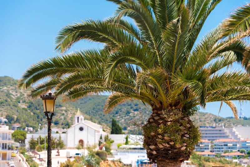 在埃尔米塔de Sant Sebastia,锡切斯,巴塞罗那, Catalunya,西班牙教会背景的棕榈树特写镜头  免版税库存照片