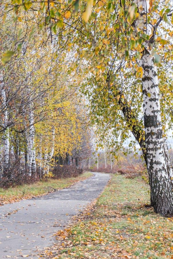在城市公园涂柏油小径在秋天 免版税库存图片