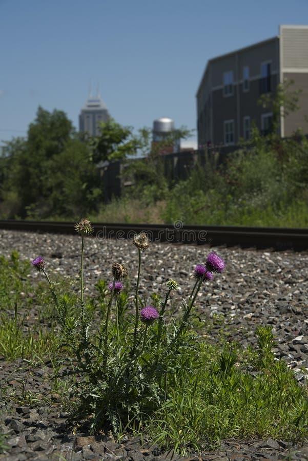 在城市布局垂直的蓟杂草 免版税库存照片
