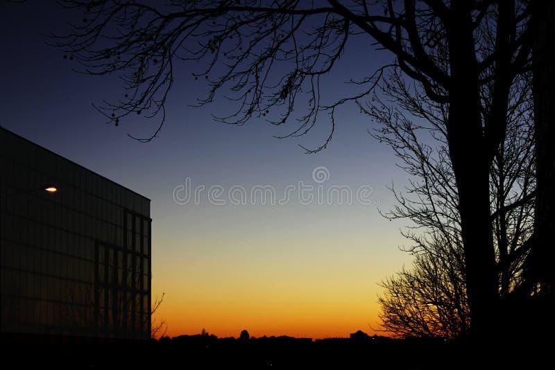 在城市日落的修造的剪影树剪影 免版税库存图片