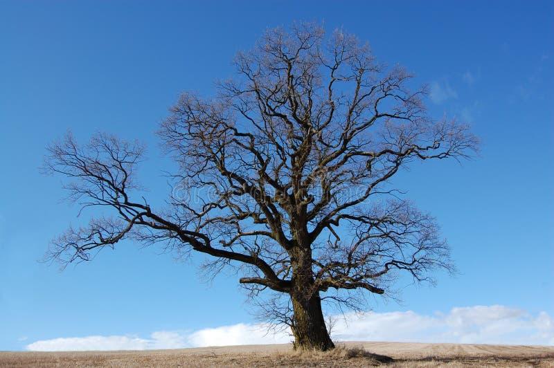 在域的结构树 库存图片