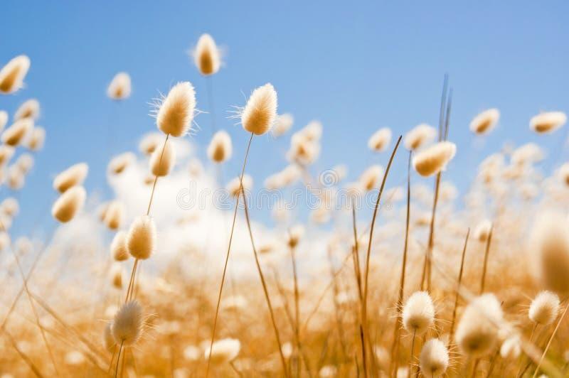 在域的金黄花与天空 库存图片