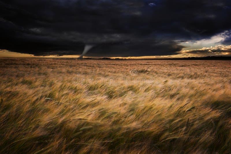 在域的龙卷风扭转者在夏天风暴 库存图片