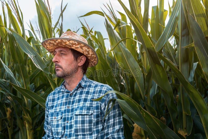 在培养的领域的严肃的玉米农夫画象 免版税图库摄影
