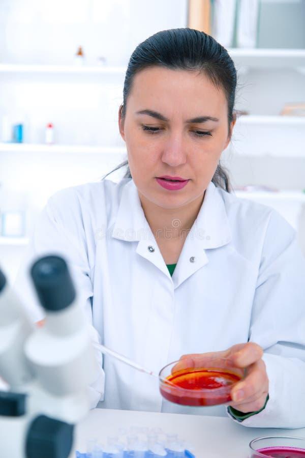 在培养皿的科学家审查的解答在实验室 库存照片