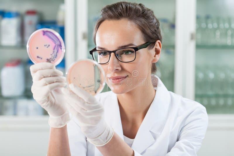 在培养皿的医生审查的解答 库存照片