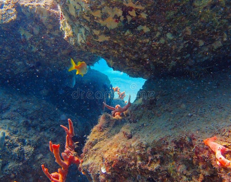 在基拉戈佛罗里达游泳的热带鱼通过曲拱 免版税库存图片