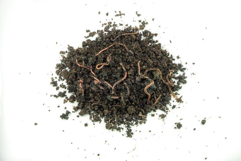 在堆地面的地球蠕虫在自然环境 免版税库存照片