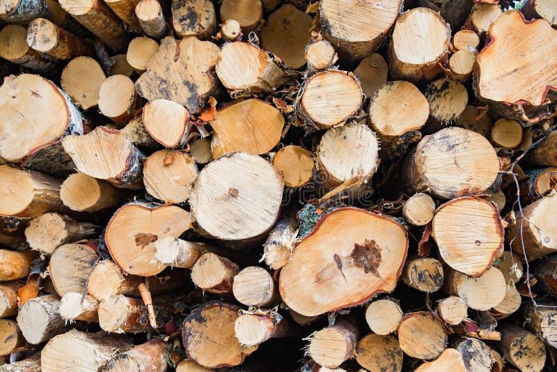 在堆的墨水树 免版税库存照片