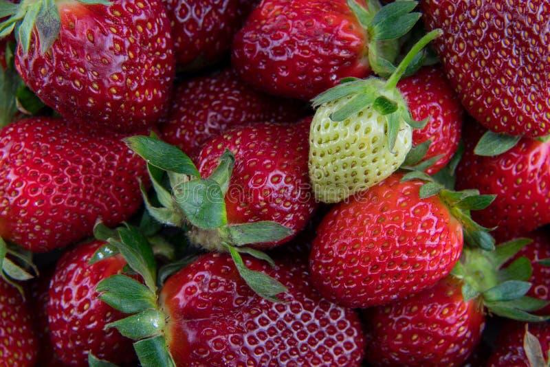 在堆的未成熟的草莓红色莓果 免版税库存图片
