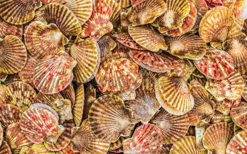 在堆的橙红壳 免版税图库摄影