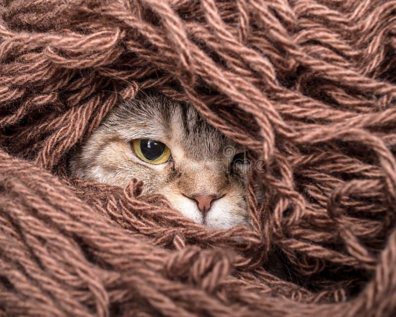在堆螺纹羊毛毛线的猫 免版税库存图片