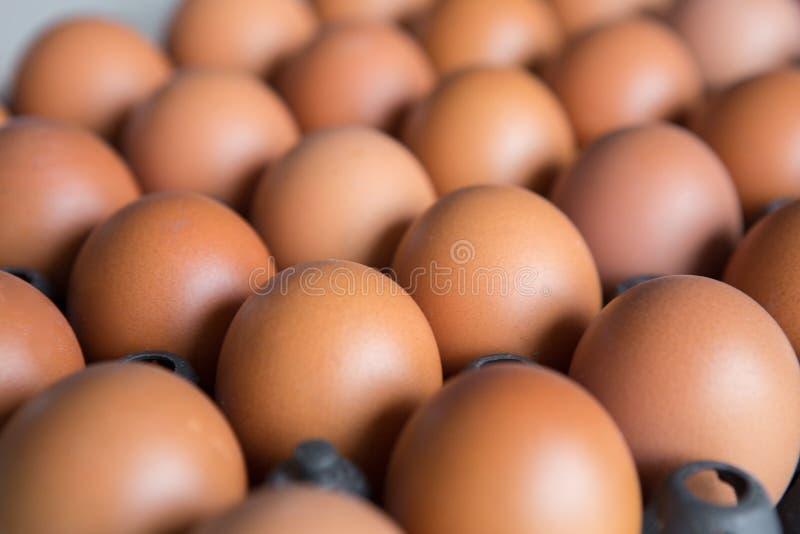 在塑料盘区的鸡蛋 库存图片