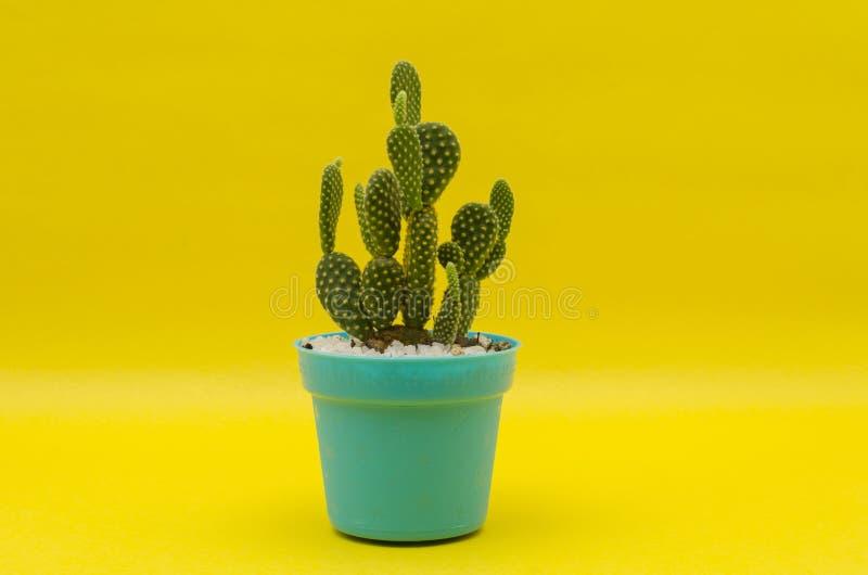 在塑料罐的一点仙人掌反对黄色背景 免版税库存图片