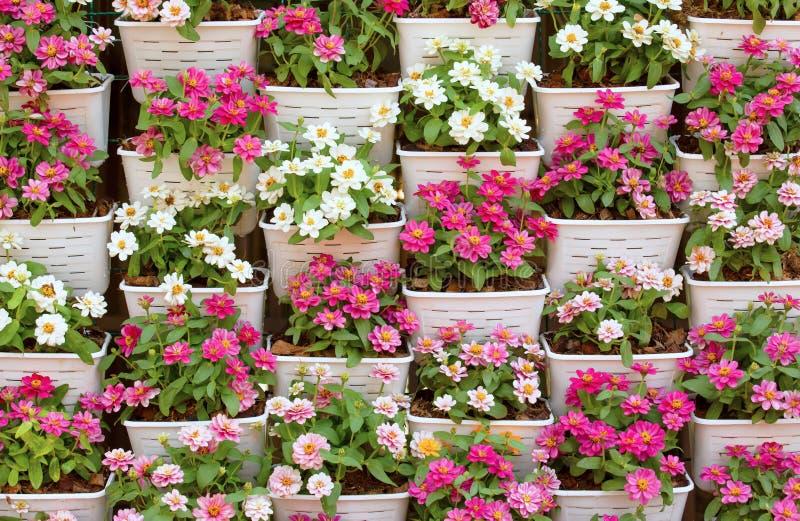 在塑料花盆的美丽的小花 免版税库存照片