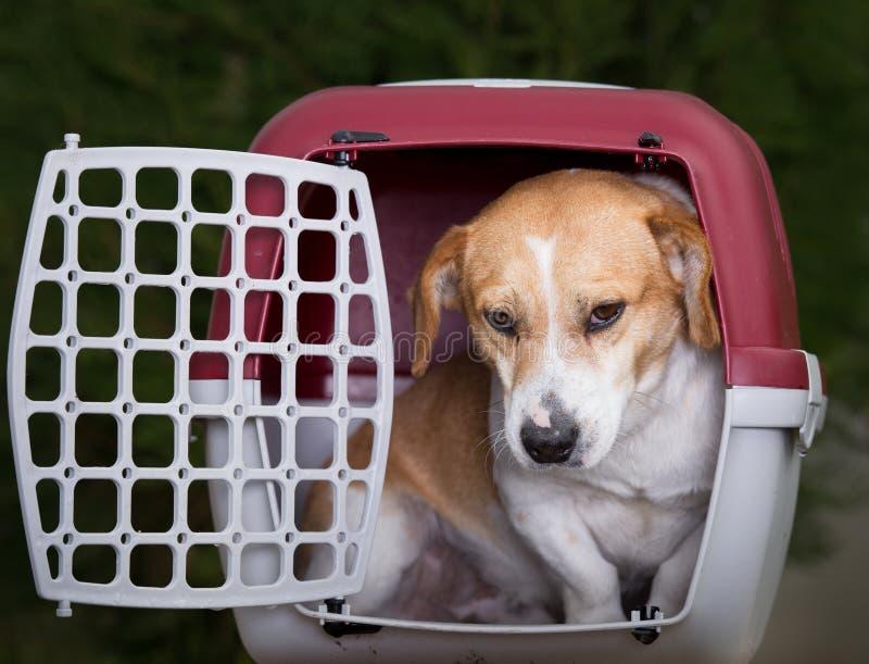 在塑料载体的狗 免版税库存照片