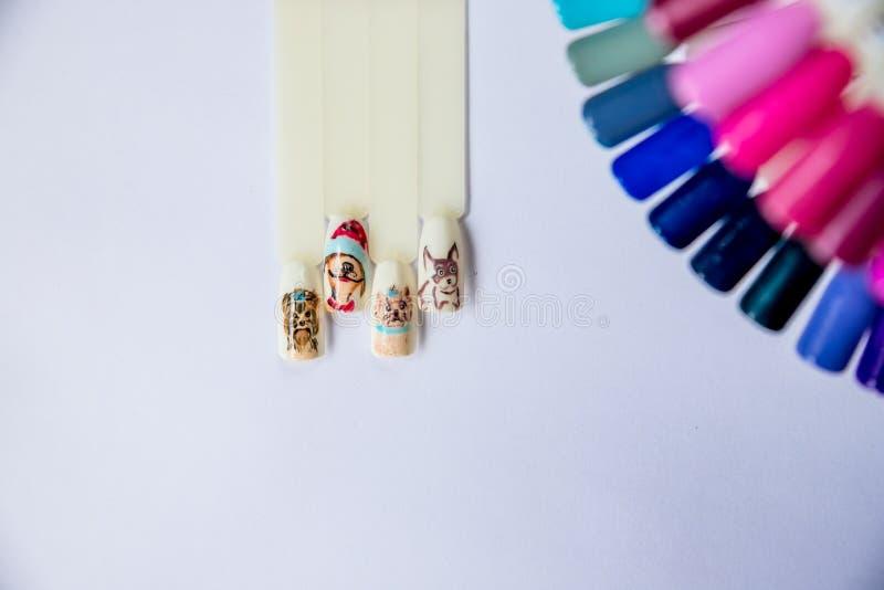 在塑料钉子技巧的美好的钉子艺术 指甲油用不同的时尚颜色 美容院的设计模板 库存图片