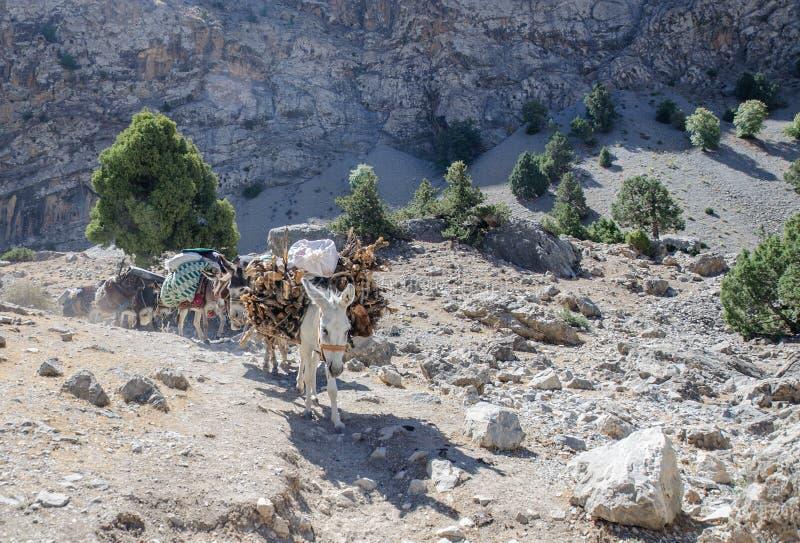 在塔吉克斯坦山的驴有蓬卡车  库存照片