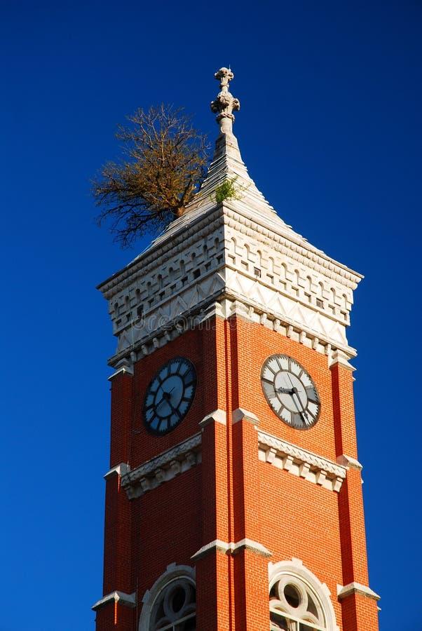 在塔的树 免版税图库摄影