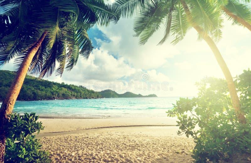 在塞舌尔群岛海滩的日落 免版税库存图片