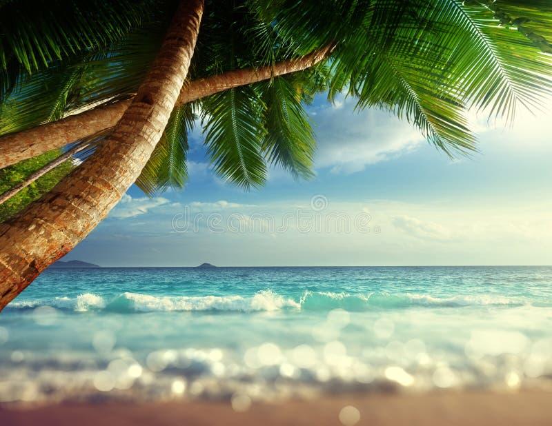 在塞舌尔群岛的日落使,掀动转移软的作用靠岸 免版税库存图片