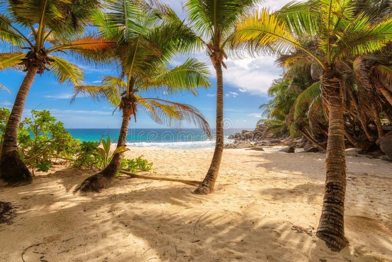 在塞舌尔群岛的热带Anse监督海滩在马埃岛 免版税库存图片