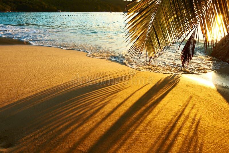 在塞舌尔群岛的美好的日落靠岸与棕榈树阴影 免版税库存图片