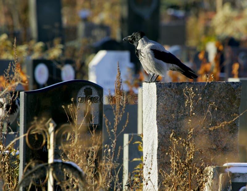 在墓碑的乌鸦 库存照片