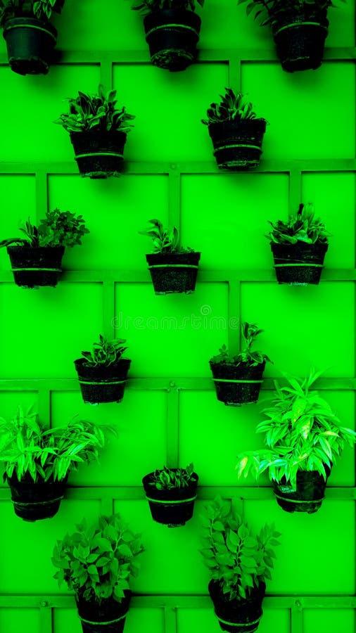 在墙壁上整洁地安排的植物罐 免版税图库摄影