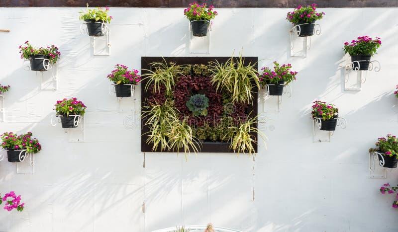 在墙壁上的五颜六色的喇叭花 免版税库存照片