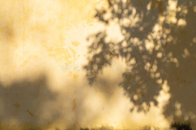 在墙壁上的树阴影 库存图片