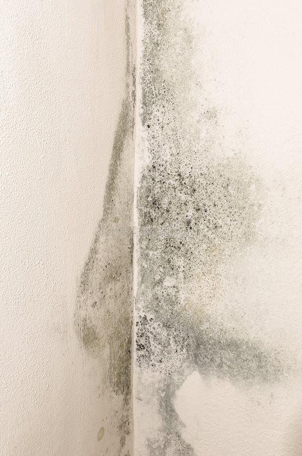 在墙壁上的模子和湿气组合 免版税库存照片