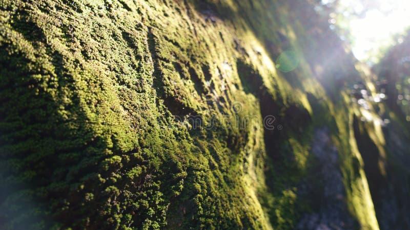 在墙壁上的真菌 免版税图库摄影