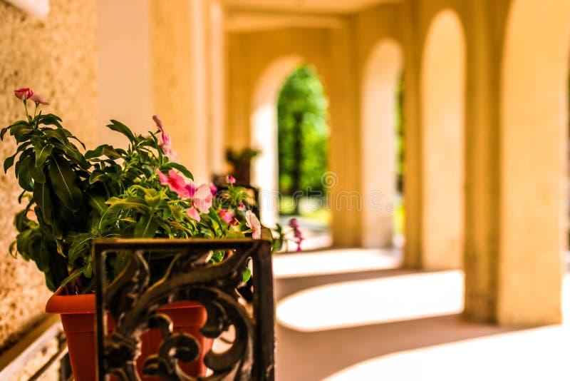在墙壁上的花一老hous与阳光通过曲拱 与空间的美好的构成文本的 库存图片